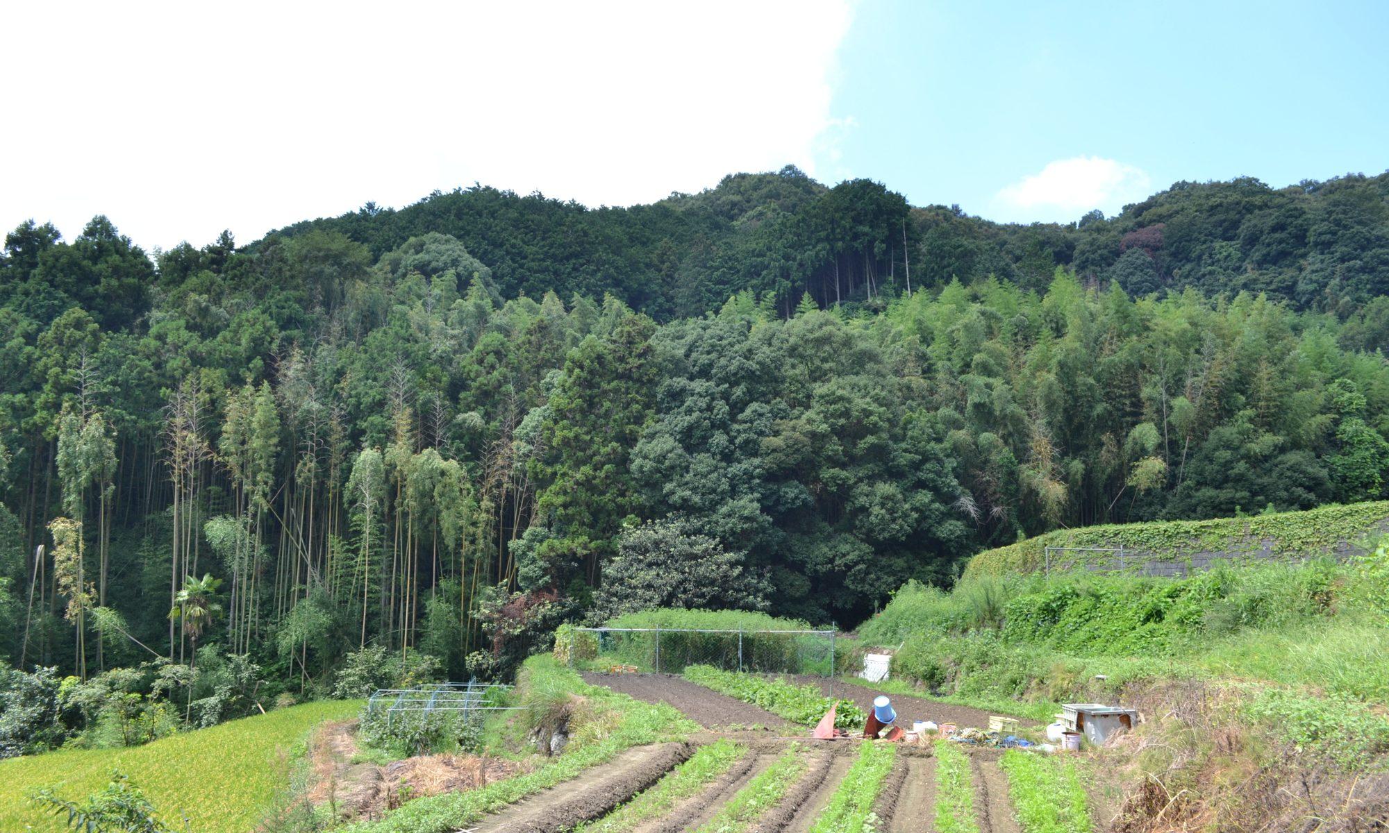 「茨木駅前マルシェ」茨木市忍頂寺河野さんの畑